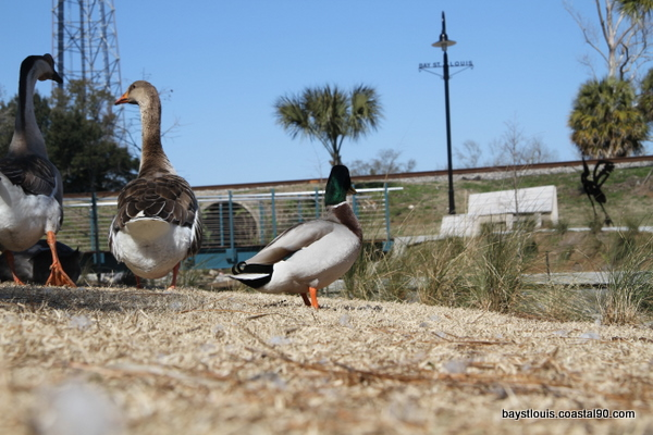 Bay Saint Louis Duck Pond is a great park for family fun.